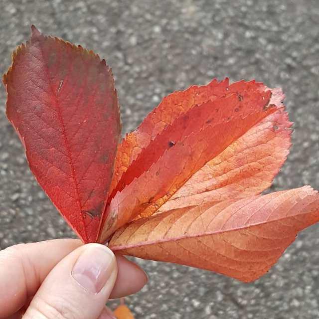 Quanto mi piace lautunno!    autumn autunno fogliehellip
