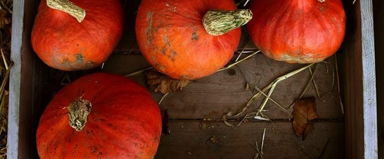 mercati agricoli milano novembre