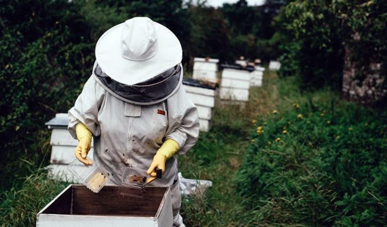 corso di apicoltura milano