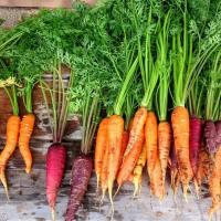 Mercato agricolo a Milano e dove trovarlo nel 2020: indirizzi, date, orari