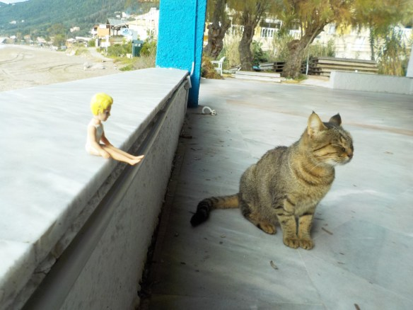 chit-chat-with-the-cat