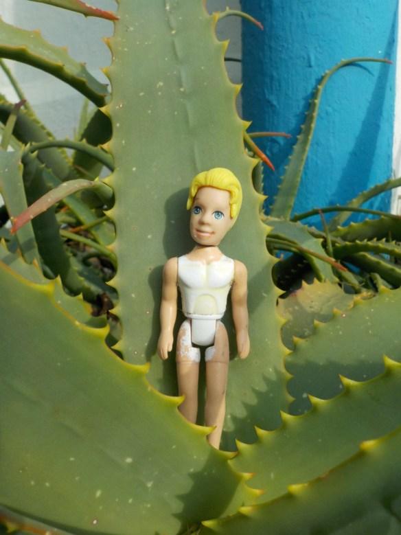 kaktus-plantage