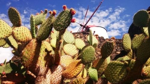 1001 Cactuses ~ Lanzarote