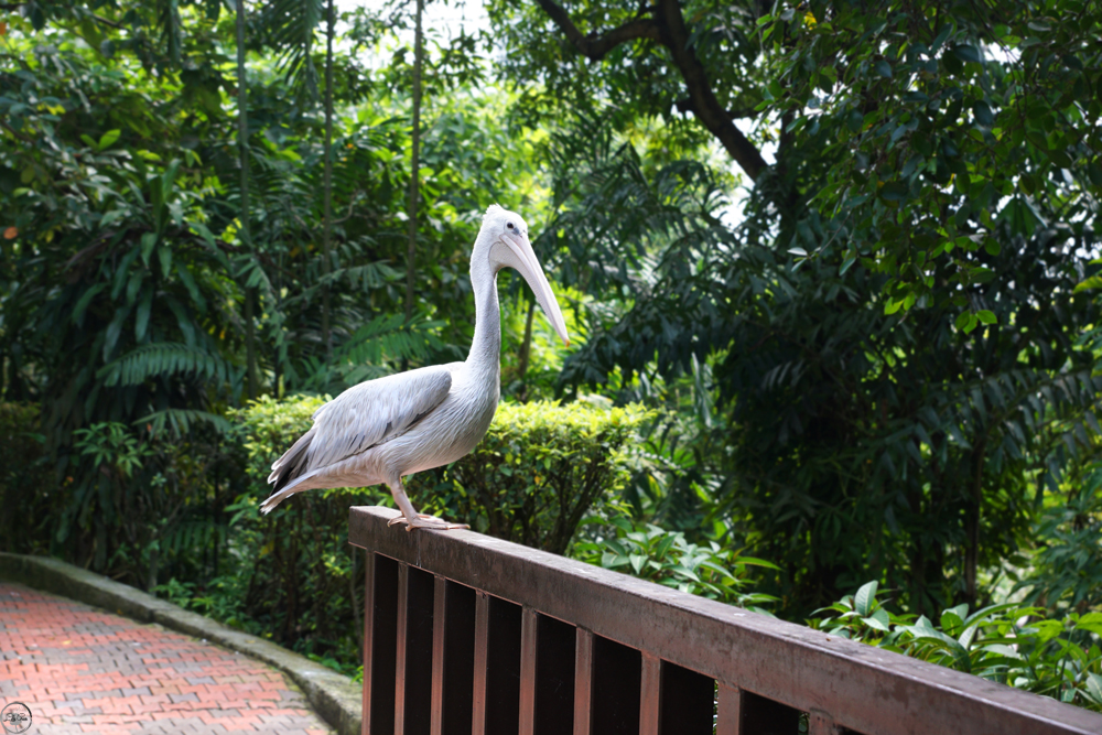 The Bird Park, KL