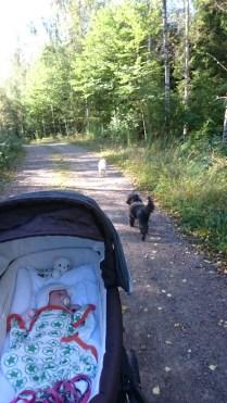 Första promenaden i vagnen
