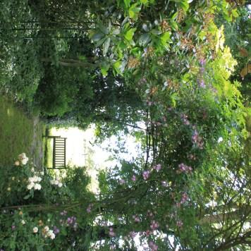 Le jardin des lianes - banc au fond du jardin