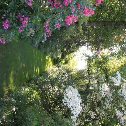 Le jardin des lianes - allee fleurie