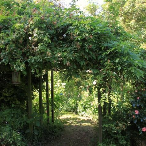 Le jardin des lianes - arcade végétale