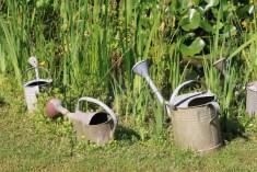 Le jardin des lianes - arrosoirs