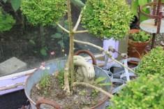 Le jardin de la goutte d'eau - la nymphe
