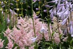 Maizicourt - zoom fleurs