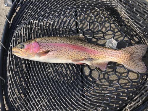 February 18 fishing report