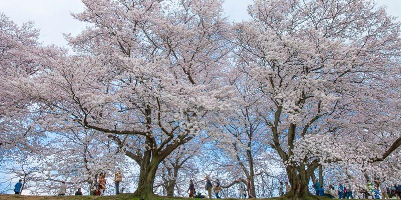 京都講座 吉光旅遊講座心得 傑利帶路帶你四季玩日本京都!