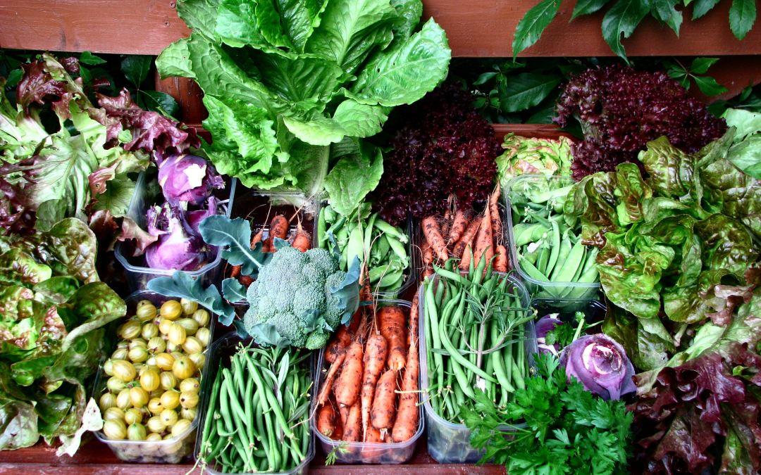 Harvesting Hunger