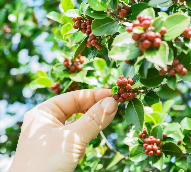 Coffee Flour on List of Top 2017 Food Innovations