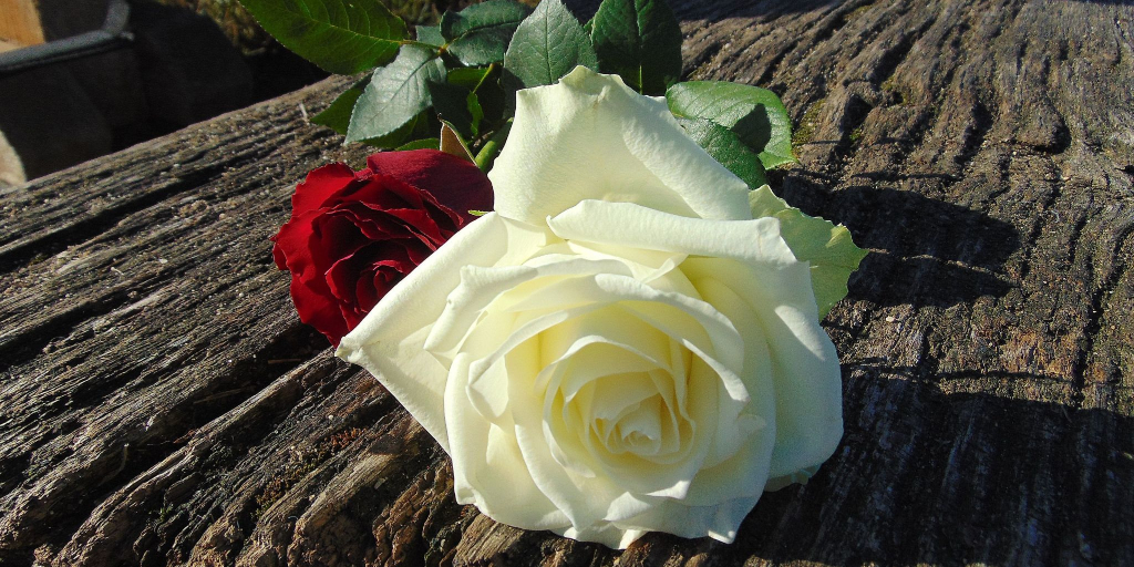 Do We Not Love the Rose in Spite of Its Thorns?