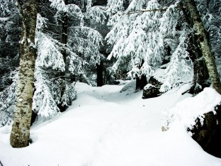 stockvault-snowy-forest132445