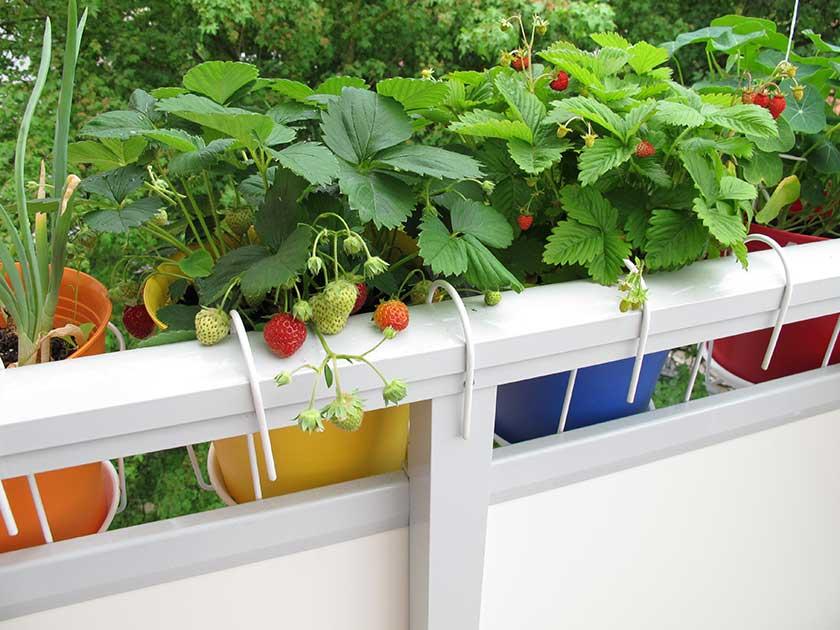 Ideen für deinen Garten Balkon & Terrasse - Lilli & Luke