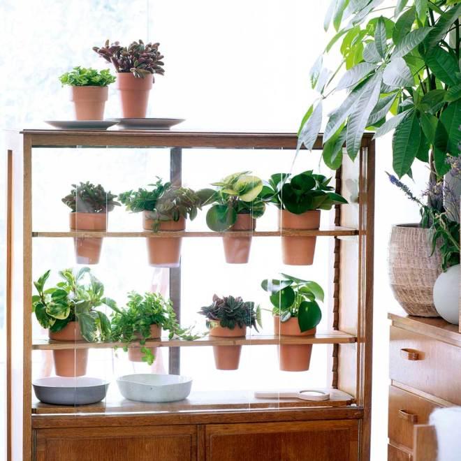 Pflanze-des-Monats-DIY-1