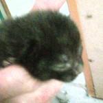 One of three kittens