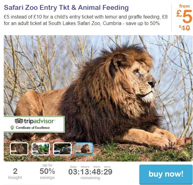 zoo 5 screenshot