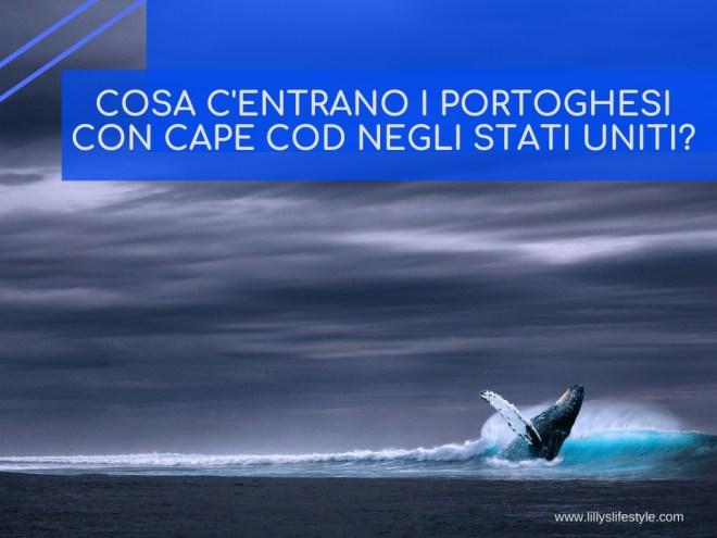 cape cod stati uniti portoghesi balene