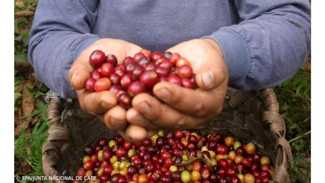 unico caffè prodotto in europa