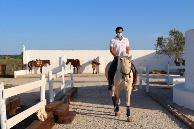 maneggio cavalli vicino lisbona portogallo