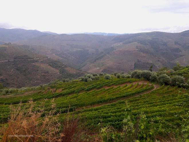 portogallo vigne alto douro