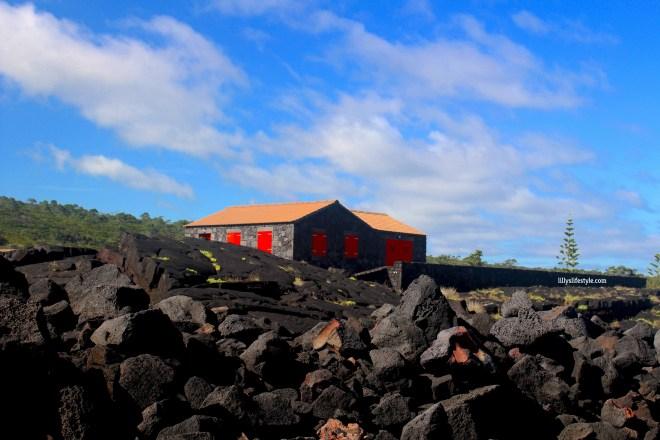 pietra lavica pico azzorre