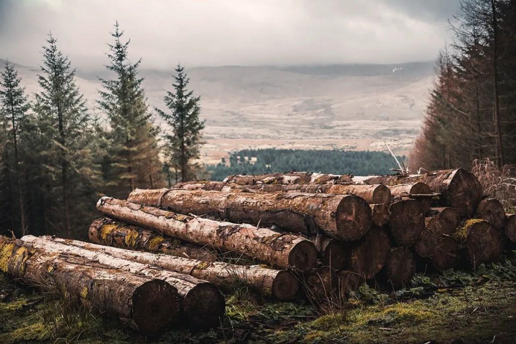 Forêt avec bois coupé empilé
