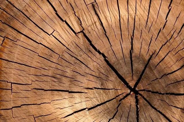 Agencement de magasin en bois : un espace authentique !