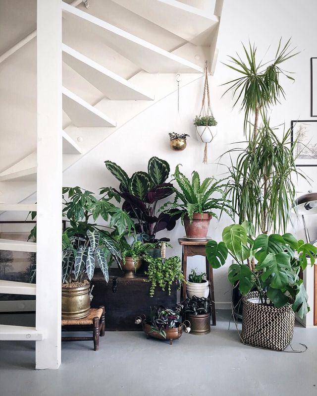 accumulation de plantes d'intérieur sous escalier
