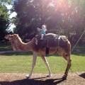 Whoohooo! Camel Ride!