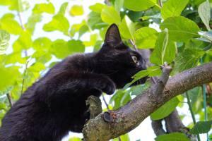 cat-1606569_1920