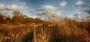 Landscape(01)