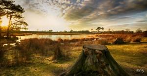 Landscape(11)