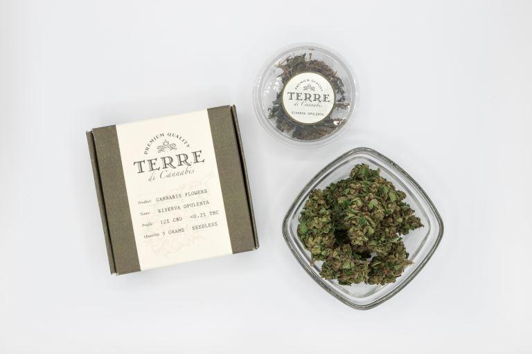 terre-di-cannabis-w7yjqzEg_p4-unsplash