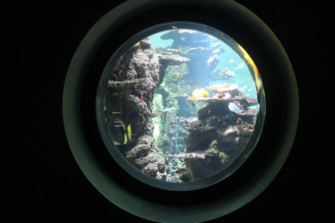 lilytoutsourre - séjour côte d'opale_33 NAUSICAA