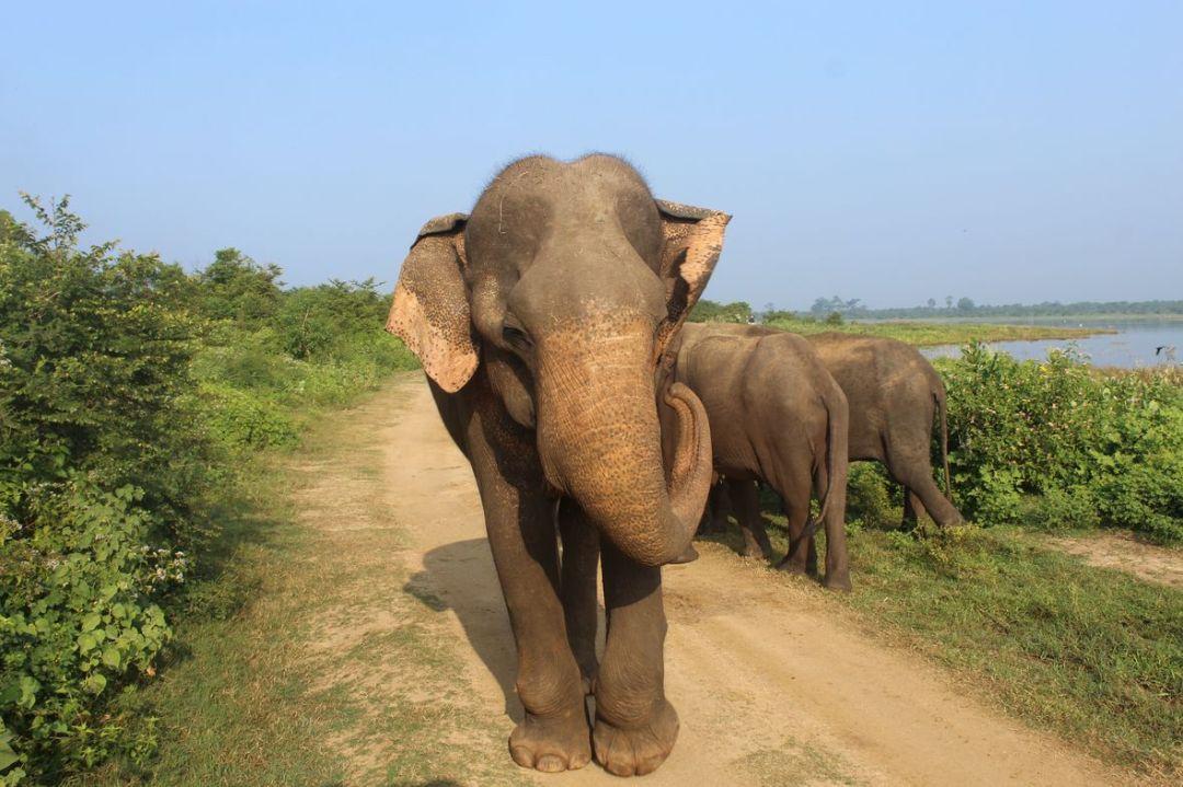 safari elephant udawalawe sri lanka