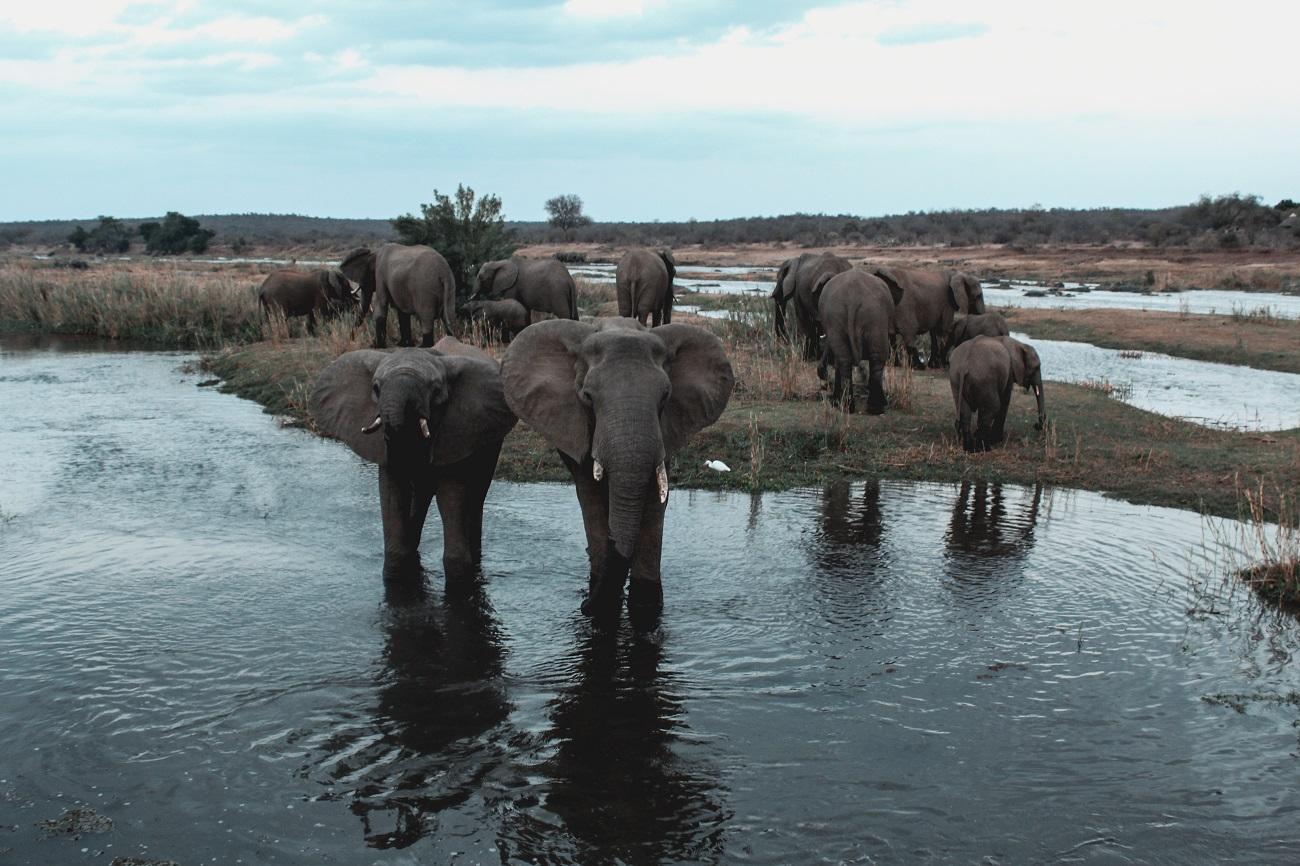 lilytoutsourire - safari au parc kruger - 3 jours dans le bush (12)