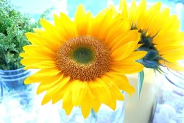 Mason Jars & Sunflowers