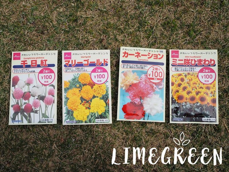 ダイソーの花の種