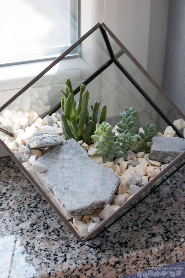 sukkulenten richtig pflanzen limettengr n. Black Bedroom Furniture Sets. Home Design Ideas