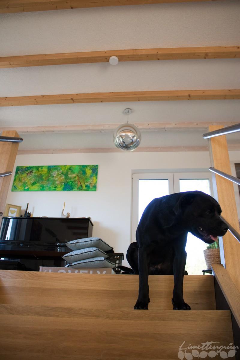 home rauchmelder retten leben limettengr n. Black Bedroom Furniture Sets. Home Design Ideas