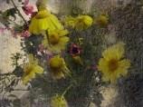 fiori di campo chiari