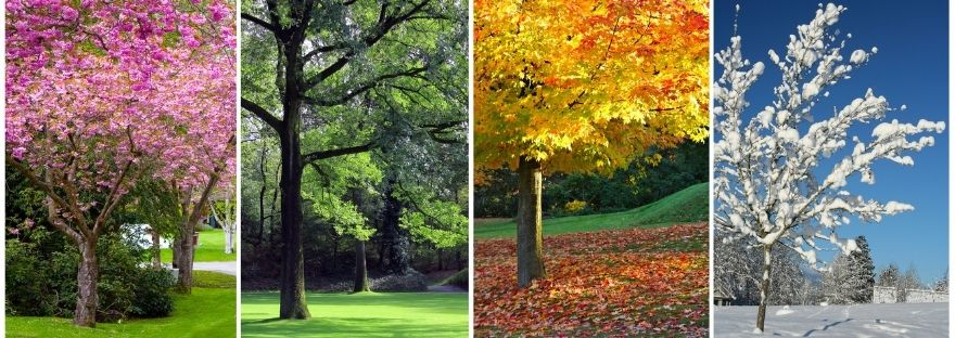Four trees displaying the four seasons
