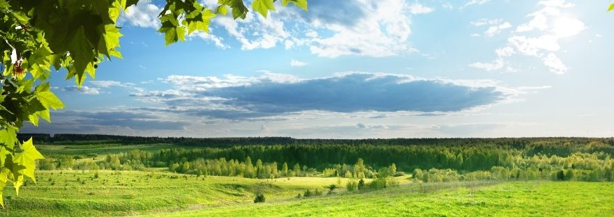 View of green pasture land