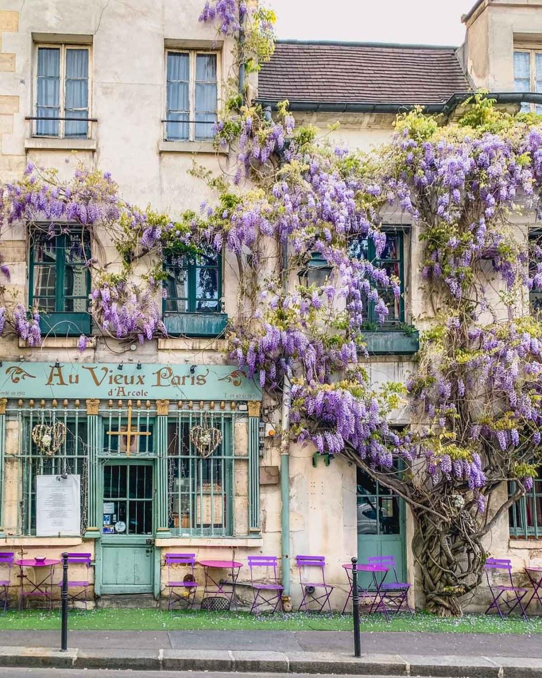 Wisteria in bloom in front of the restaurant Au Vieux Paris d'Arcole - Paris