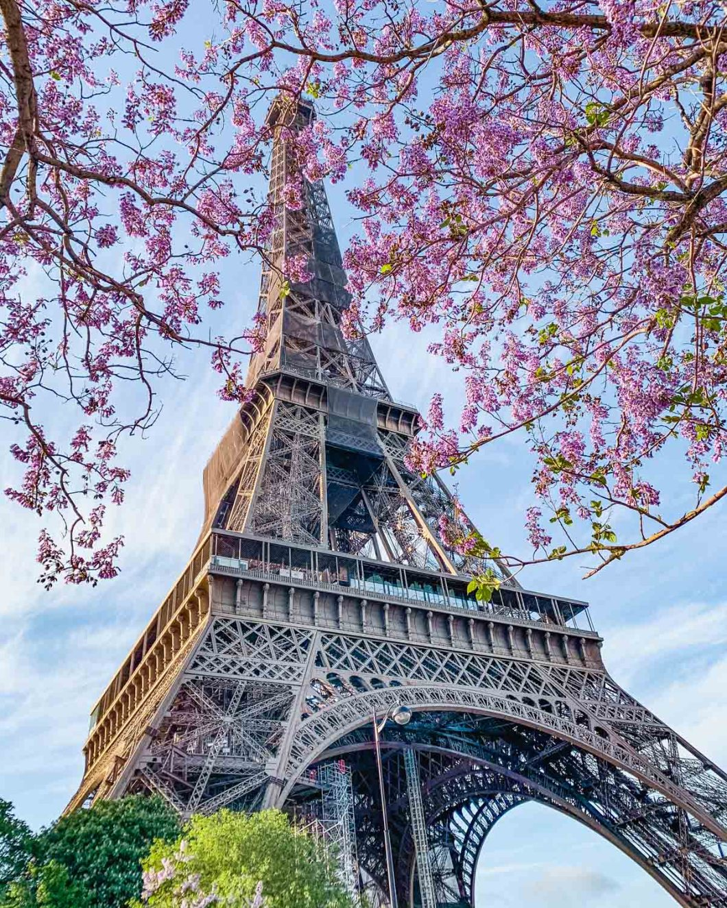 Paulownia trees (Empress trees) in bloom at the Eiffel Tower in the Trocadero gardens - Spring in Paris
